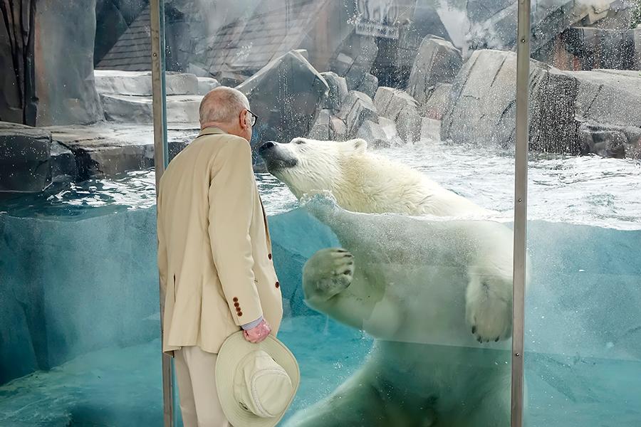 Kali - Polar Bear St. Louis Zoo